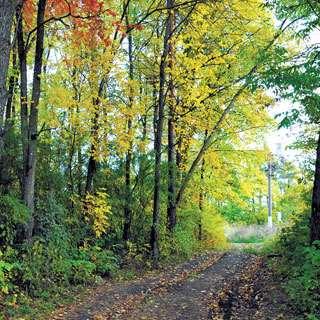 Other - YO1 Luxury Nature Cure Resort Catskills Monticello