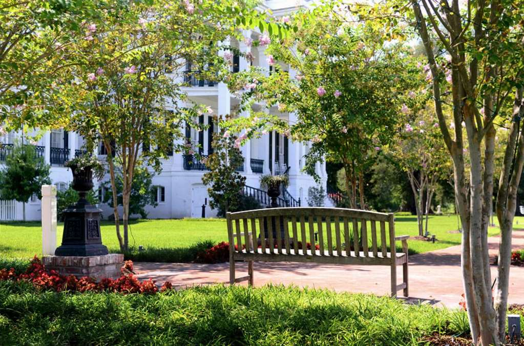 Bench Mansion CrepeMyrtles