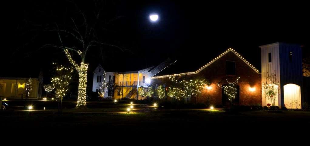 Cypress at night crop moon