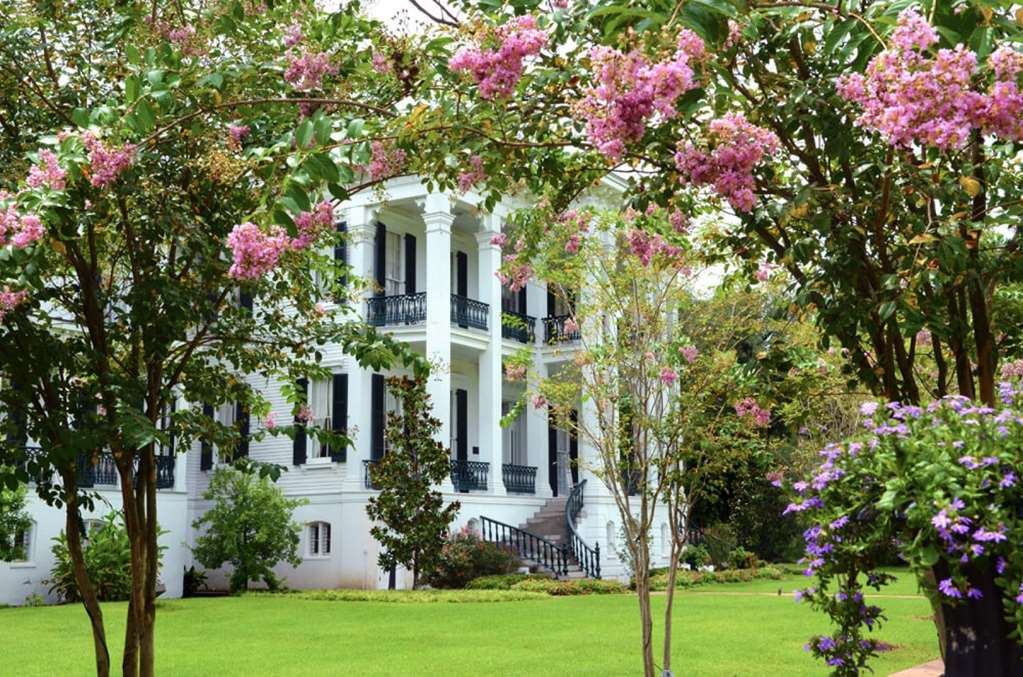 Mansion Crepe Myrtles