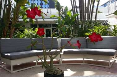 proam - Albion Hotel Miami Beach