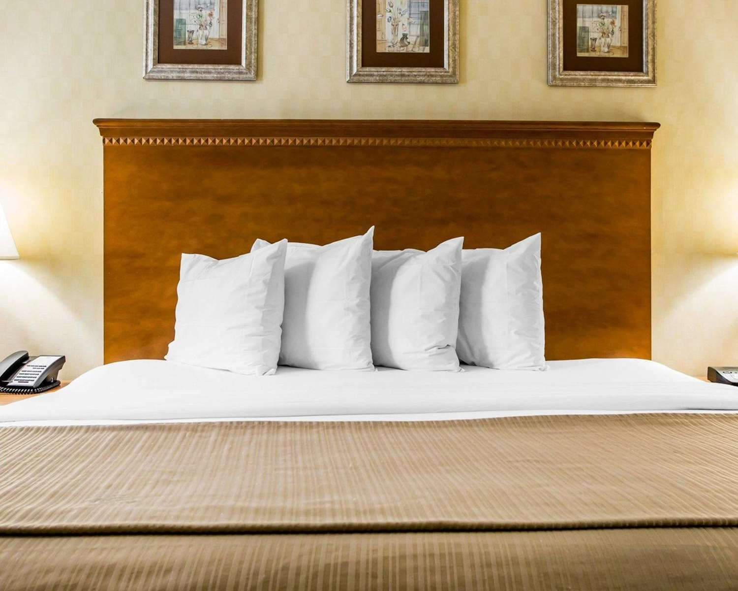 Room - Quality Inn & Suites Absecon